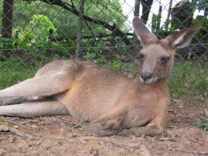 australien-februar-2012-110-klein