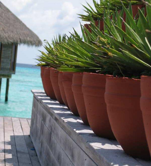 Conrad Maldives Rangali Island: Maledivische Kultur entdecken