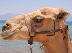 Ägypten Jun 2011--019-klein