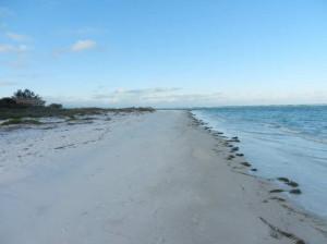 Florida Mar 2013-15-klein